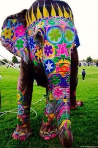 pongalfest elephant